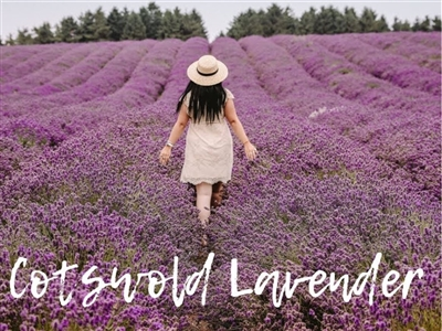 Cotswold Lavender Fields & Broadway