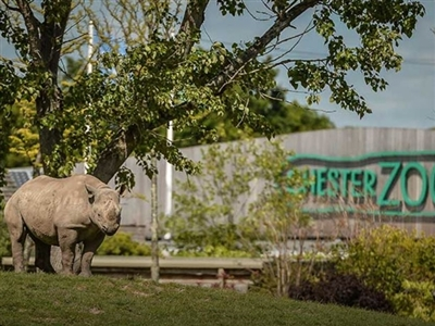 Chester Zoo (Coach Transfer Only)